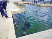 Seehund im Aquarium GEOMAR