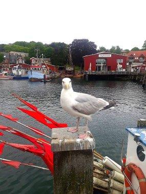 Möwe am Hafen